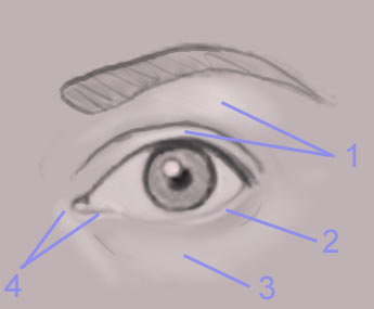 Drawing the human eye onlypencil drawing tutorials.